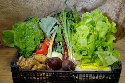 Picture of £16.25 Vegetable Box Inc Eggs